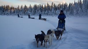 Dog sledding-Kiruna-Dog sledding excursions in Svappavaara near Kiruna-2