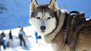 Dog sledding-Province of Huesca-Mushing excursions in Tena Valley, Huesca-7