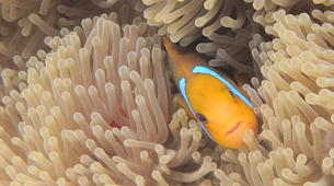 Snorkeling-Bora Bora-Snorkeling sur l'île de Bora Bora-12