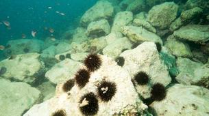 Plongée sous-marine-Pula-First Dive in Pula, Croatia-3