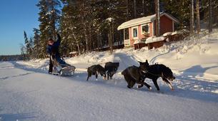 Dog sledding-Kiruna-Dog sledding excursions in Svappavaara near Kiruna-6