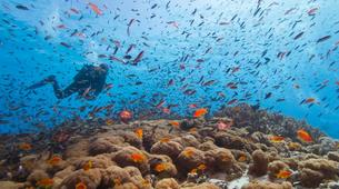 Scuba Diving-Zanzibar-Adventure dives in Paje, Zanzibar-2