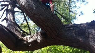 Rock climbing-Fontainebleau-Multi-Aventure dans la forêt de Fontainebleau-3