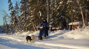 Dog sledding-Kiruna-Dog sledding excursions in Svappavaara near Kiruna-5