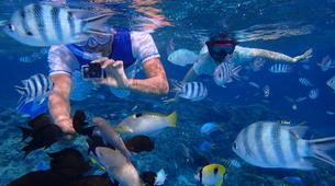 Snorkeling-Bora Bora-Snorkeling sur l'île de Bora Bora-7