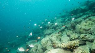 Plongée sous-marine-Pula-First Dive in Pula, Croatia-5