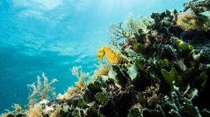 Plongée sous-marine-Pula-First Dive in Pula, Croatia-6