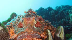 Scuba Diving-Zanzibar-Adventure dives in Paje, Zanzibar-5