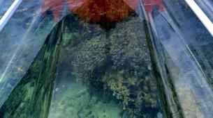 Kayak de mer-Lagon de Saint-Gilles-Balade en Kayak transparent dans le lagon de Saint-Gilles-6