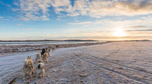 Dog sledding-Selfoss-Dog Sledding From Reykjavik-3