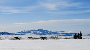 Dog sledding-Selfoss-Dog Sledding From Reykjavik-5