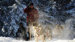 Dog sledding-Luleå-8D/7N Dog sledding and snowshoeing raid in swedish Lapland-3