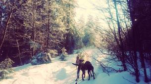 Dog sledding-Luleå-8D/7N Dog sledding and snowshoeing raid in swedish Lapland-4