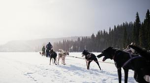Dog sledding-Luleå-8D/7N Dog-sledding raid in Swedish Lapland-6
