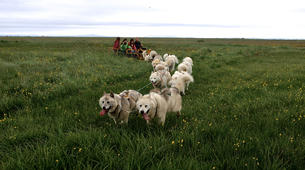 Dog sledding-Selfoss-Dog Sledding From Reykjavik-2