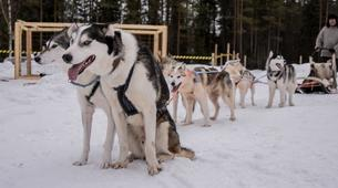 Dog sledding-Oulu-Dog sledding excursion near Oulu-3