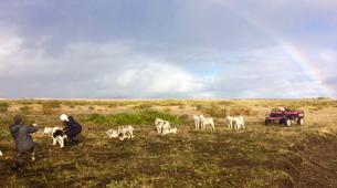 Dog sledding-Selfoss-Dog Sledding From Reykjavik-4