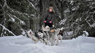 Dog sledding-Oulu-Dog sledding excursion near Oulu-5