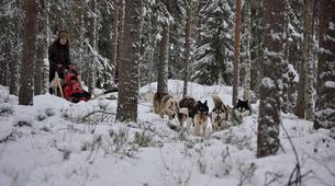 Dog sledding-Oulu-Dog sledding excursion near Oulu-4