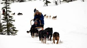 Dog sledding-Trondheim-Mushing excursions in Koppera near Trondheim-2