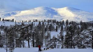 Dog sledding-Trondheim-Mushing excursions in Koppera near Trondheim-5