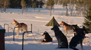 Dog sledding-Trondheim-2 day mushing excursion in Koppera near Trondheim-2