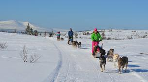 Dog sledding-Trondheim-Mushing excursions in Koppera near Trondheim-4