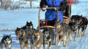 Dog sledding-Trondheim-2 day mushing excursion in Koppera near Trondheim-5