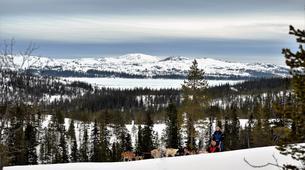 Dog sledding-Trondheim-Mushing excursions in Koppera near Trondheim-6