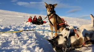 Dog sledding-Geilo-Dog sledding excursion in Geilo-1
