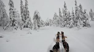 Dog sledding-Trondheim-Mushing excursions in Koppera near Trondheim-1