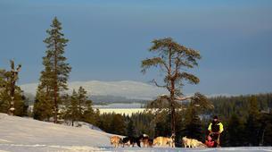 Dog sledding-Trondheim-2 day mushing excursion in Koppera near Trondheim-6