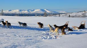 Dog sledding-Trondheim-2 day mushing excursion in Koppera near Trondheim-1