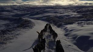 Dog sledding-Geilo-Dog sledding excursion in Geilo-2