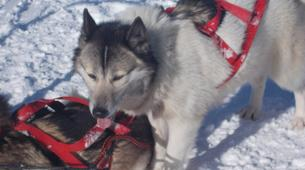 Dog sledding-Thorens-Glières-Dog sledding excursion in the Glières Plateau near Annecy-1