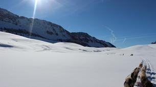 Dog sledding-Thorens-Glières-Dog sledding excursion in the Glières Plateau near Annecy-3