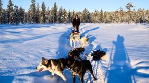 Dog sledding-Finnmark-Full day dog sledding excursion in Melkefoss-3