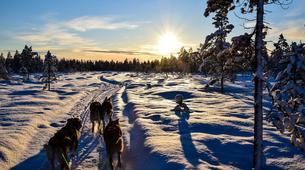 Dog sledding-Finnmark-Full day dog sledding excursion in Melkefoss-6