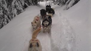 Dog sledding-Thorens-Glières-Dog sledding excursion in the Glières Plateau near Annecy-6