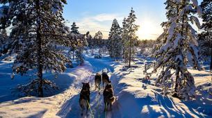 Dog sledding-Finnmark-Full day dog sledding excursion in Melkefoss-5