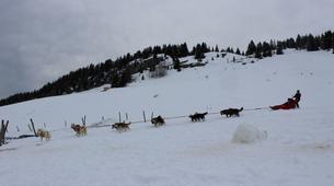 Dog sledding-Thorens-Glières-Dog sledding excursion in the Glières Plateau near Annecy-2