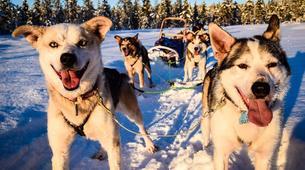 Dog sledding-Finnmark-Full day dog sledding excursion in Melkefoss-2