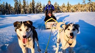 Dog sledding-Finnmark-Full day dog sledding excursion in Melkefoss-4