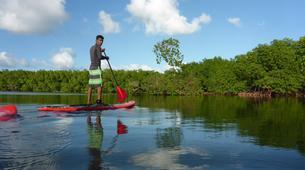 Stand Up Paddle-Morne-à-l'Eau-Excursion Stand Up Paddle dans la Réserve Naturelle du Grand Cul de Sac Marin en Guadeloupe-1