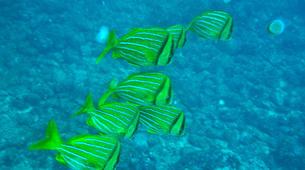 Scuba Diving-Tamarindo-Adventure dives in Tamarindo and Las Catalinas-4