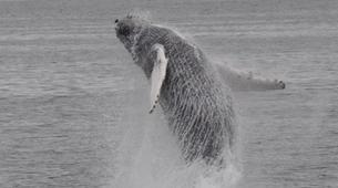 Wildlife Experiences-Reykjavik-Whale watching excursion from Reykjavik-2