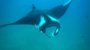 Scuba Diving-Tamarindo-Adventure dives in Tamarindo and Las Catalinas-2