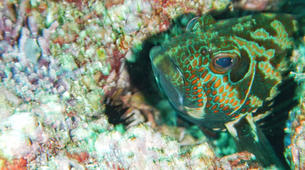 Scuba Diving-Tamarindo-Adventure dives in Tamarindo and Las Catalinas-6