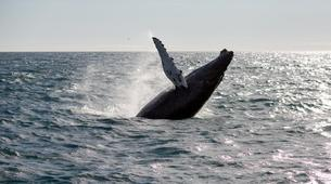 Wildlife Experiences-Reykjavik-Whale watching excursion from Reykjavik-1
