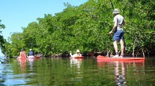 Stand Up Paddle-Morne-à-l'Eau-Excursion Stand Up Paddle dans la Réserve Naturelle du Grand Cul de Sac Marin en Guadeloupe-6